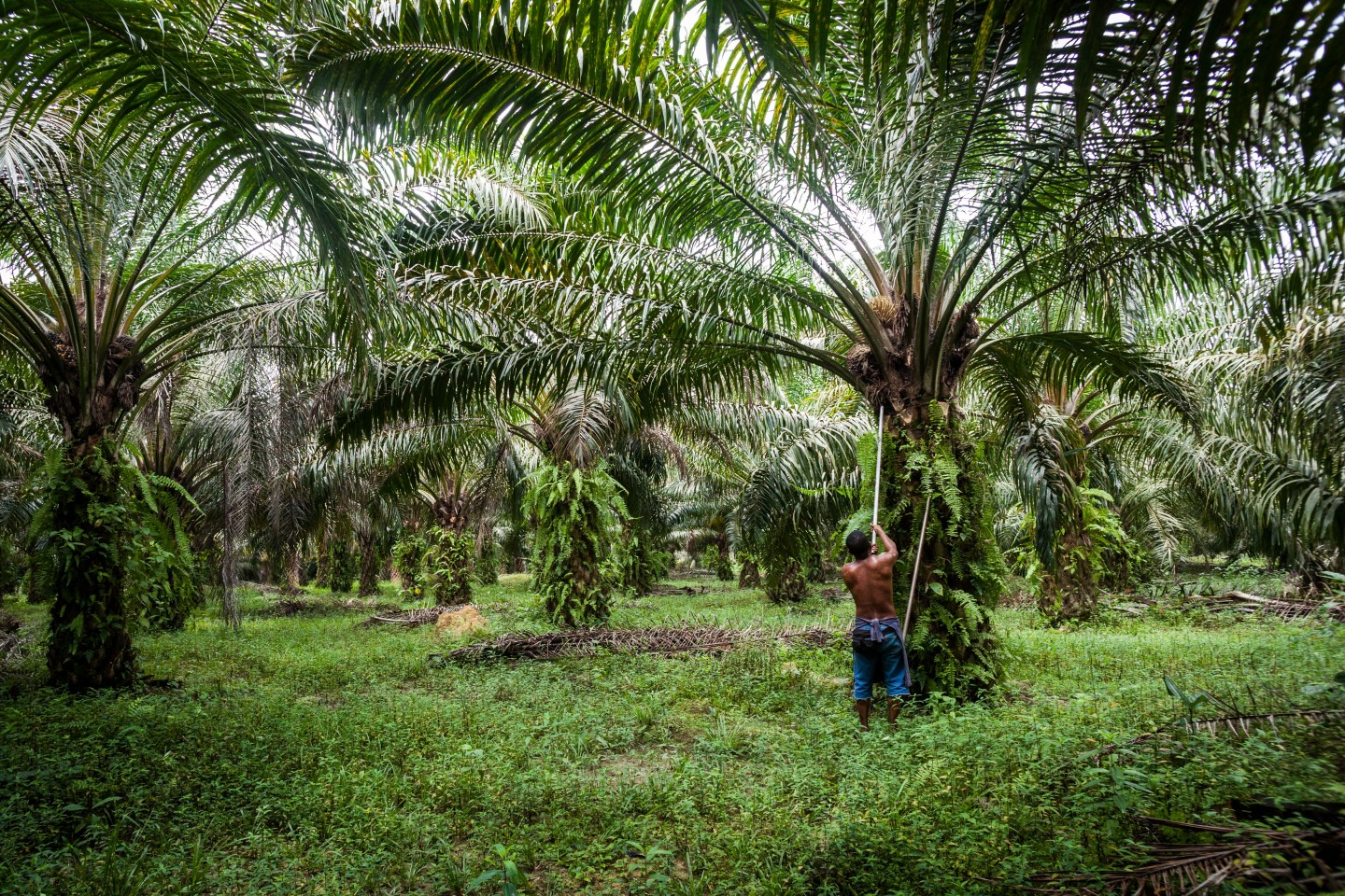 Palm Oil OR Trader Jobs In Singapore (Now Hiring) | blogger.com