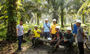 Explore comparisons carried out on palm oil sustainability standards below